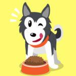 dog-food-online