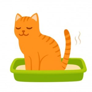Buy Litter for Cats Online at Best Prices in India